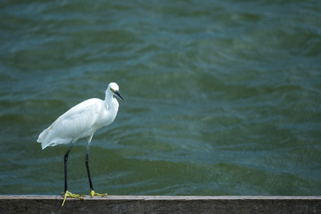 white bird stand by river