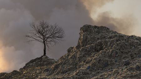 the mountain of trash and dead tree Imagens