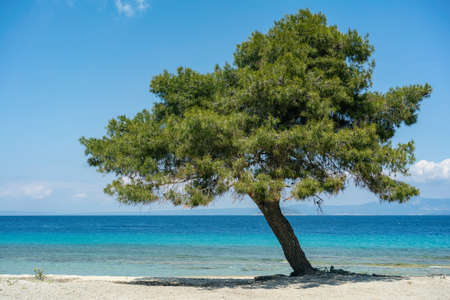 Lagoon beach in Port Glarokavos in Kassandra penisula Chalkidiki Greece Thessaloniki Stock Photo