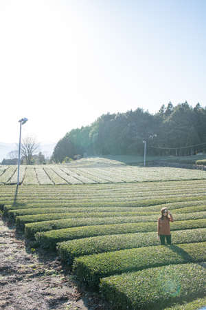 Pretty woman standing in the middle of the tea tree with Fuji Mountian view in Fujinomiya, Shizuoka. Shizuoka is one of the best natural on Tea in the world. 免版税图像 - 156726563