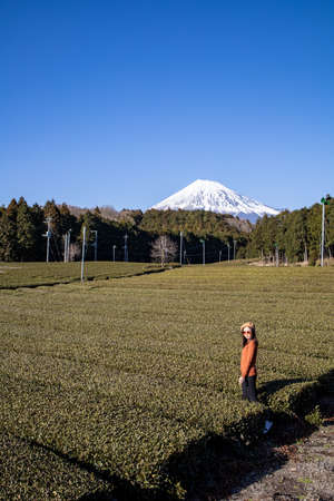 Pretty woman standing in the middle of the tea tree with Fuji Mountian view in Fujinomiya, Shizuoka. Shizuoka is one of the best natural on Tea in the world. 免版税图像 - 156726564