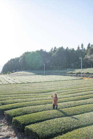 Pretty woman standing in the middle of the tea tree with Fuji Mountian view in Fujinomiya, Shizuoka. Shizuoka is one of the best natural on Tea in the world. 免版税图像 - 156726567
