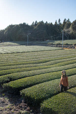 Pretty woman standing in the middle of the tea tree with Fuji Mountian view in Fujinomiya, Shizuoka. Shizuoka is one of the best natural on Tea in the world. Stock Photo