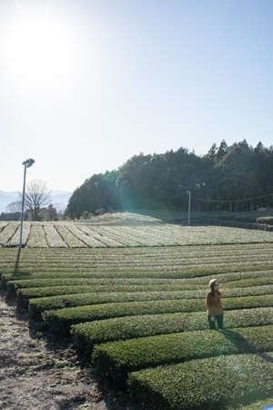Pretty woman standing in the middle of the tea tree with Fuji Mountian view in Fujinomiya, Shizuoka. Shizuoka is one of the best natural on Tea in the world. 免版税图像 - 156726571