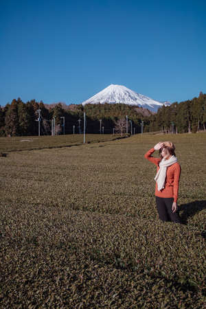 Pretty woman standing in the middle of the tea tree with Fuji Mountian view in Fujinomiya, Shizuoka. Shizuoka is one of the best natural on Tea in the world. 免版税图像 - 156726575