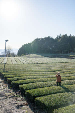 Pretty woman standing in the middle of the tea tree with Fuji Mountian view in Fujinomiya, Shizuoka. Shizuoka is one of the best natural on Tea in the world. 免版税图像 - 156726576