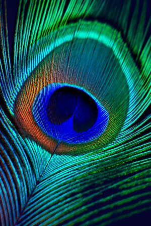 Fondo de plumas de pavo real Foto de archivo