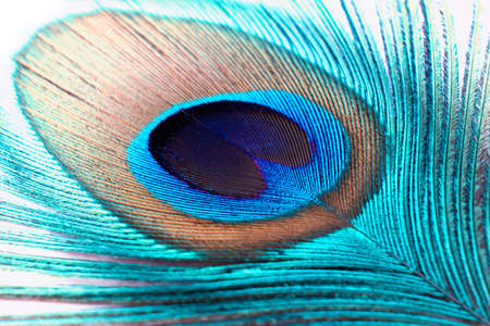 Abstract background Peacock feathers Reklamní fotografie