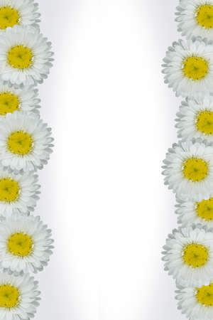 White flower shadow Background with anemones can be used for a product - web - advertising