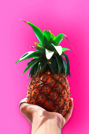 Pineapple on hand over pink background, top view, wide composition. Summer fashion, holiday concept Banco de Imagens