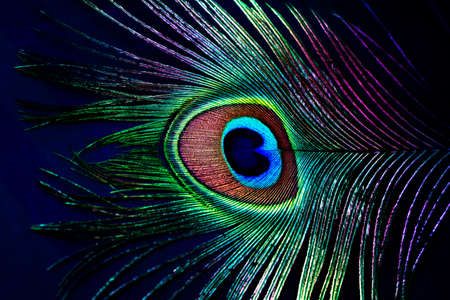 Peacock Feather colorful Backgrounds