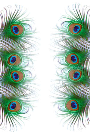 Peacock Feather design on white background - Advertising
