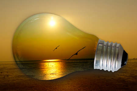 light bulb with a bird seagull flying in the sunset