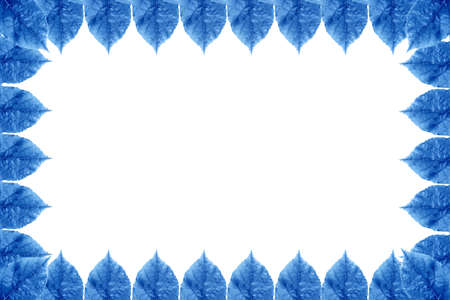 pedicel: Background of leaf frame isolated on a white background. Image with copy space and color effect. Stock Photo