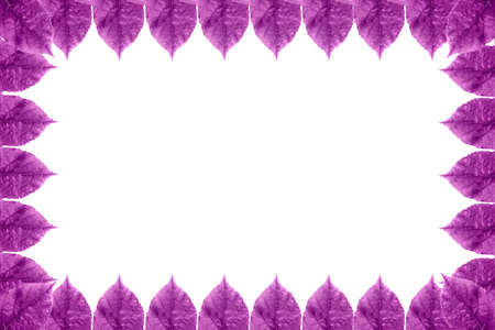 Background of leaf frame isolated on a white background. Image with copy space and color effect. Stock Photo