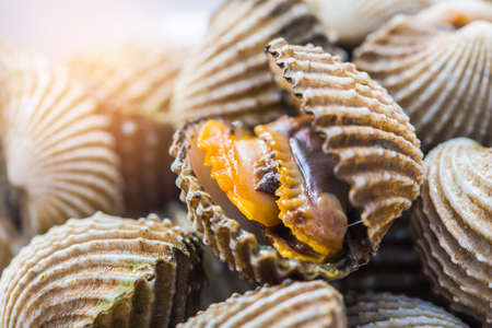 ridged: Delicious boiled or steamed cockles(Scallop seafood) food background or manu. shellfish smile. Small. Selective focus.