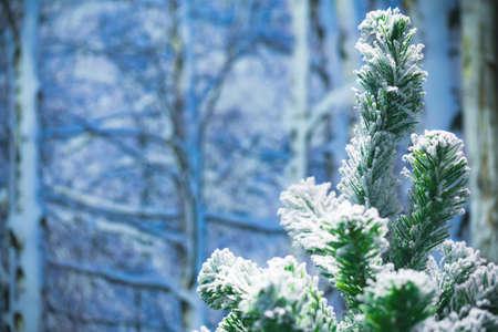 Christmas tree with snow and bokeh on winter season. Stock Photo