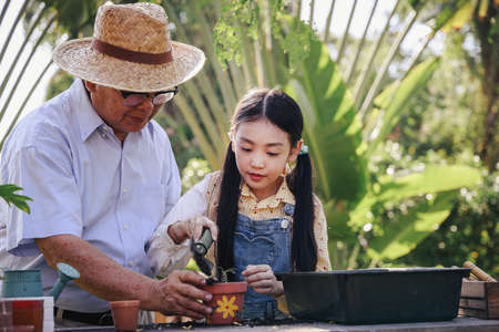 Asian retirement grandfather and pretty granddaughter helping planting together for planting trees at home garden. Happy and enjoy family outdoor activity in holiday. Standard-Bild