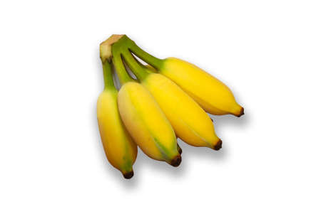 Yong Cultivated banana. photo