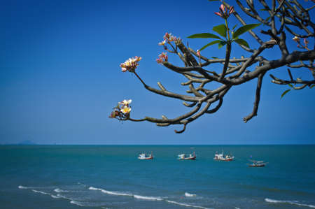 Hua Hin Beach Thailand with Frangipani flowers photo