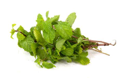 Lemon balm herb leaf posy isolated over white background