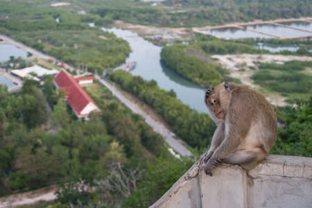 Thai monkey on the hill beach background photo