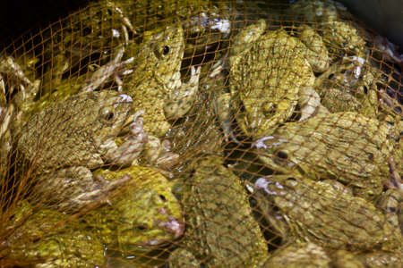 Lot of frogs for sale in Thailand market Stock Photo - 15361247