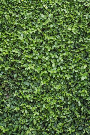 Green leaf wall background