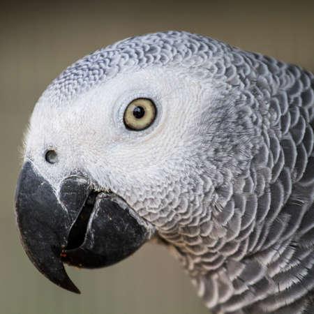 eclectus: White Eclectus Parrot Stock Photo