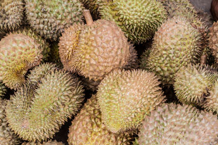 Durian King of the fruit in Thailand Stock Photo - 15772266