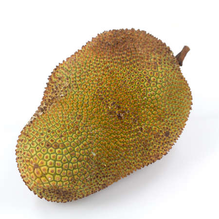 cempedak fruit Thailand in white background