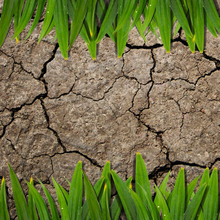 green leaf and soil ground texture background photo