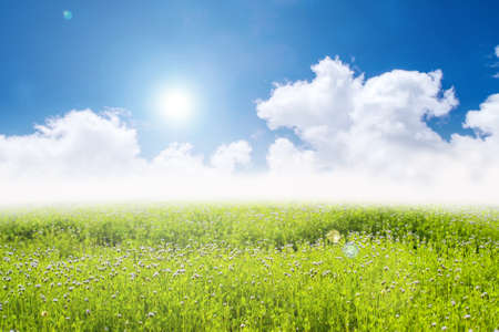 filed: blue sky and green flower field  Stock Photo