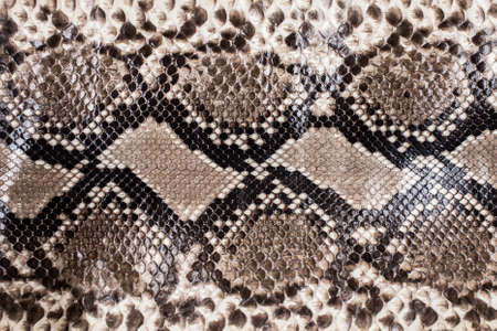 Snake skin patroon