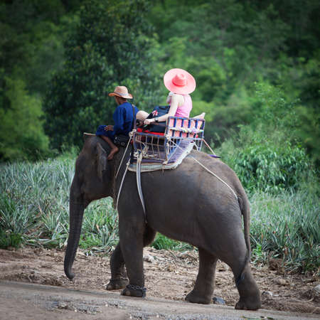 tourist ride elephant travel in forest Thailand