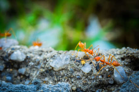 convection: weaver ants in the forest green background