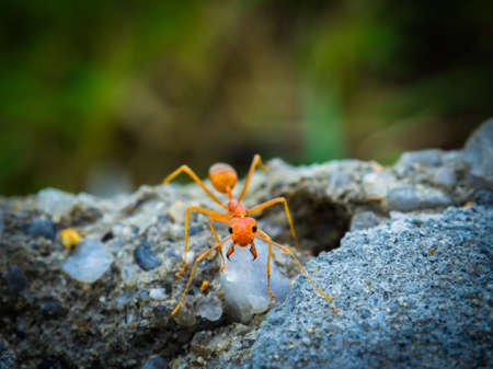 factions: weaver ants in the forest green background