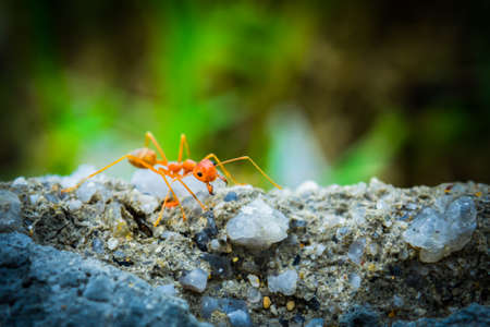 tightness: weaver ants in the forest green background