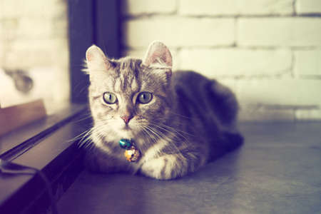 color tone: cute cat in vintage color tone