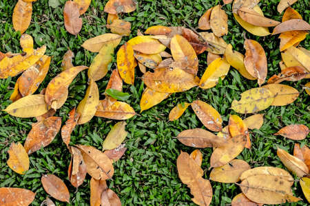 unpressed: dry leaf background with colorful Stock Photo