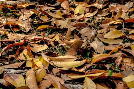 unpressed: fallen leaf focus on center with warm tone