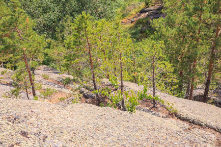 Unusual rocks in the mountains. Trees growing from stone. Altai region, Russia.
