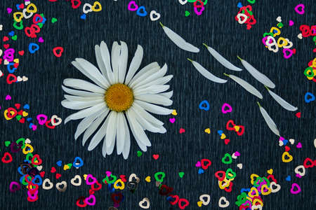 Chamomile close-up on a black background with small hearts, one flower. Petals torn off. 스톡 콘텐츠
