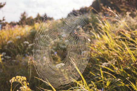 Spider web on grass in the field