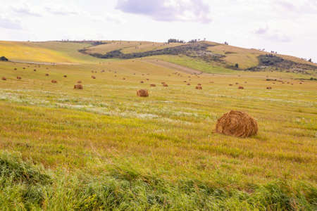 View of a field with sheaves on a background of mountains. Rural landscape. Altai region.