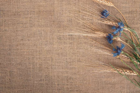 Floral flat lay design,cornflowers and rye on a canvas background, space for text