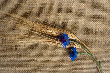 Floral flat lay design,cornflowers and rye on a canvas background,copy space for text