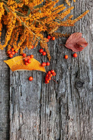 Autumn pattern of yellow flower, ashberry and fallen leaves on old wooden background