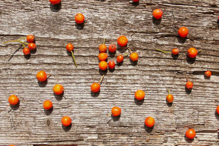 Autumn pattern of ashberry on old wooden background