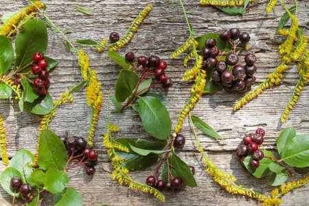 Autumn pattern of yellow flowers and chokeberry on old wooden background 스톡 콘텐츠